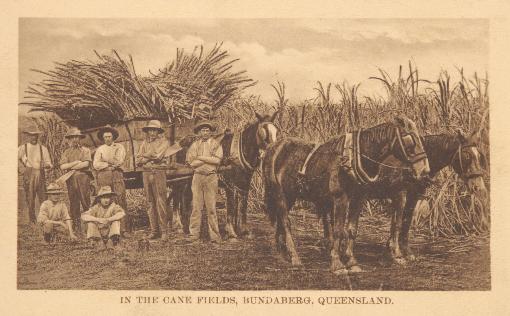 Photographic postcard, 'In the Cane Fields, Bundaberg, Queensland', about 1914.